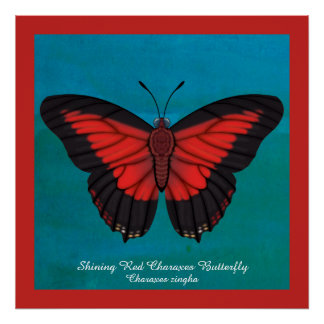 Shining Red Charaxes Butterfly Poster
