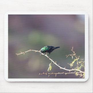 Shining Sunbird (Cinnyris habessinicus) Mouse Pad
