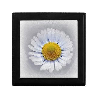 shining white daisy gift box