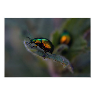 Shiny Beetle Macro Poster