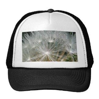 Shiny waterdrops on a white dandelion trucker hat