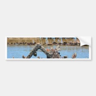Shipwreck in the mangroves bumper sticker
