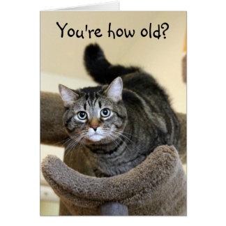 Shocked Cat Birthday Wishes Card