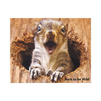 Shocked Squirrel Gallery Wrapped Canvas