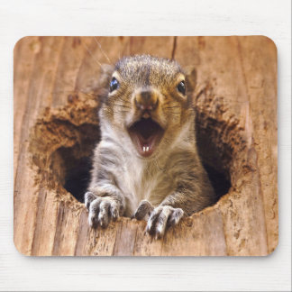 Shocked Squirrel Mouse Pad