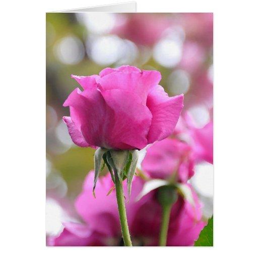 Shocking Pink Beautiful Rose Card