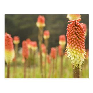 Shore Acres Botanical Gardens near Coos Bay Postcard