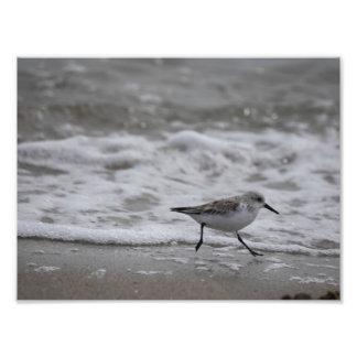Shore Bird 001 Photo Print
