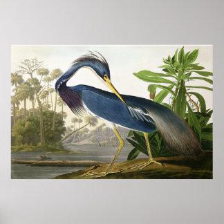 Shore Lark - Wildlife Painter John Audubon Poster