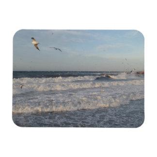 "Shore & Waves & Seagulls 3""x4"" Magnet"