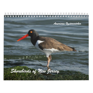 Shorebirds of New Jersey Wall Calendars