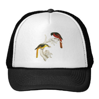 Short-billed Minivet Cap
