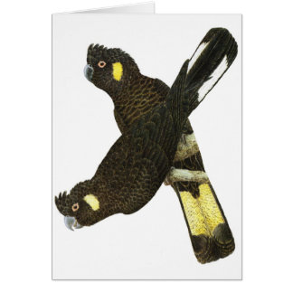 Short-billed & Yellow-tailed Black Cockatoos Card