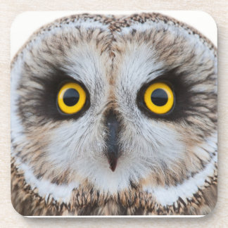 Short-eared Owl Coaster
