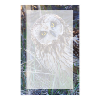 Short-eared Owl Customized Stationery