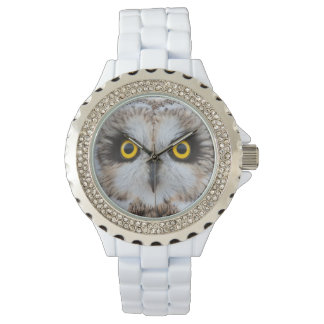 Short-eared Owl Eyes Watch