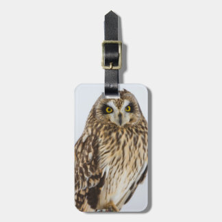 Short-eared Owl on fence post Luggage Tag