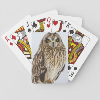 Short-eared Owl on fence post Poker Cards