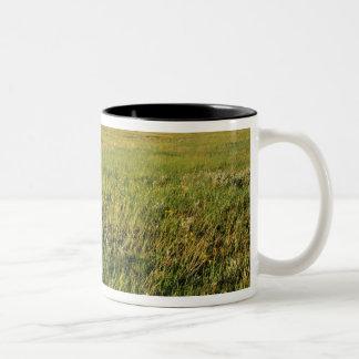 Short Grass Prairie in remote northeastern Two-Tone Mug