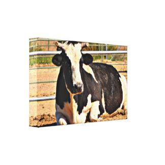 Short Horn Cow Canvas Art
