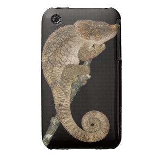 Short-horned chameleon(Calumma brevicornis) iPhone 3 Cases