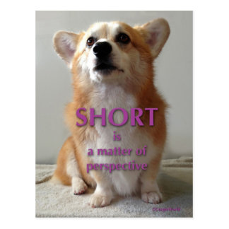 Short is a Matter of Perspective Cute Corgi Card Postcard