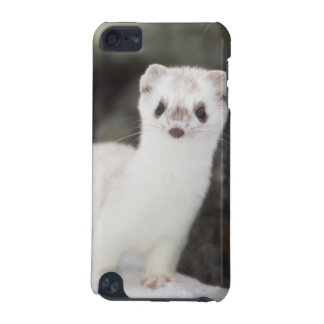 Short-tailed weasel hunting for voles iPod touch 5G cover