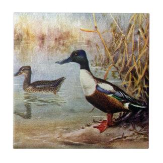 Shoveler Ducks Vintage Illustration Ceramic Tile