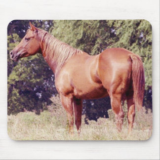 Show Horse Mouse Pad