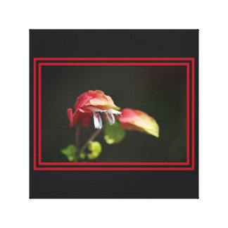 Shrimp Plant Wall Art by bubbleblue Gallery Wrap Canvas