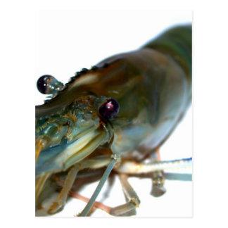 shrimp postcards