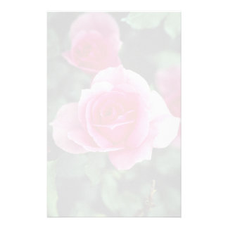 Shrub Rose 'Country Dance' Roses Stationery