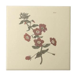 Shrubby Pimpernel Botanical Illustration Small Square Tile