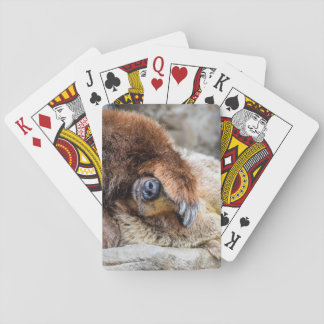 Shy Bear Playing Cards