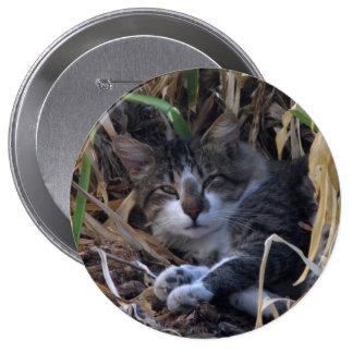 Shy Boy Cat Button