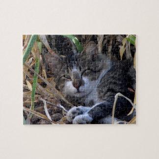 Shy Boy Cat Waking Up Puzzle