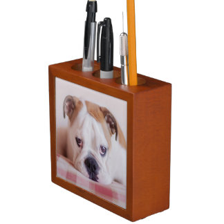 Shy English Bulldog Puppy Desk Organiser