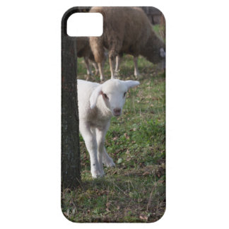 Shy lamb barely there iPhone 5 case