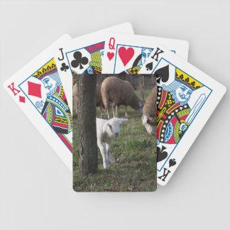 Shy lamb bicycle playing cards