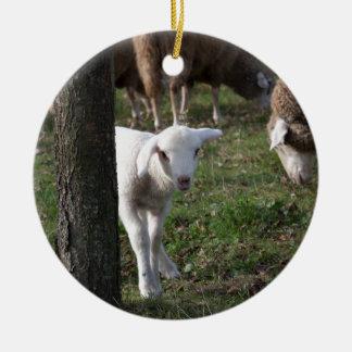 Shy lamb ceramic ornament