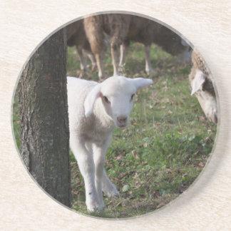 Shy lamb coaster