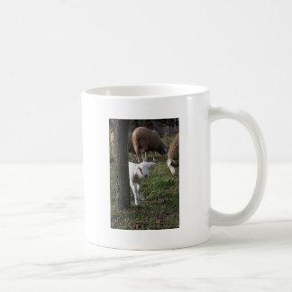 Shy lamb coffee mug