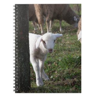 Shy lamb notebook