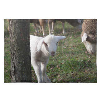 Shy lamb placemat