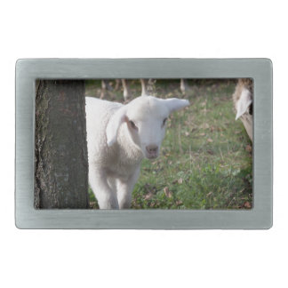 Shy lamb rectangular belt buckle