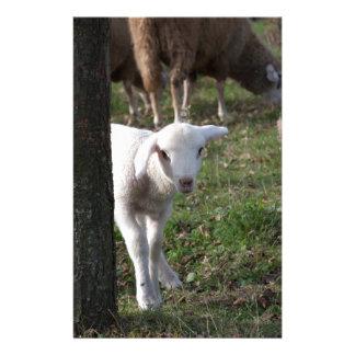 Shy lamb stationery