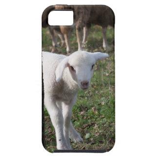 Shy lamb tough iPhone 5 case