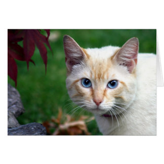 Siamese cat face greeting card