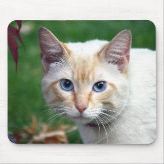 Siamese cat face mousepad
