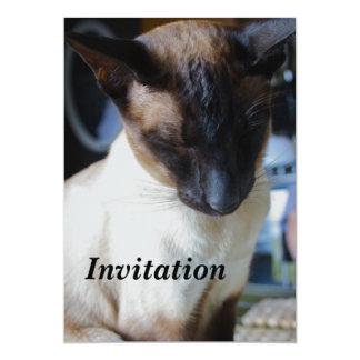 """Siamese Cat Invitation 5"""" X 7"""" Invitation Card"""
